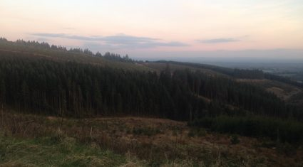 On the spot advice for forest owners from Teagasc at Timber2015