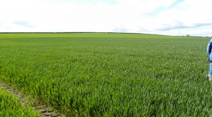 Winter crops 10 days behind normal growth rates