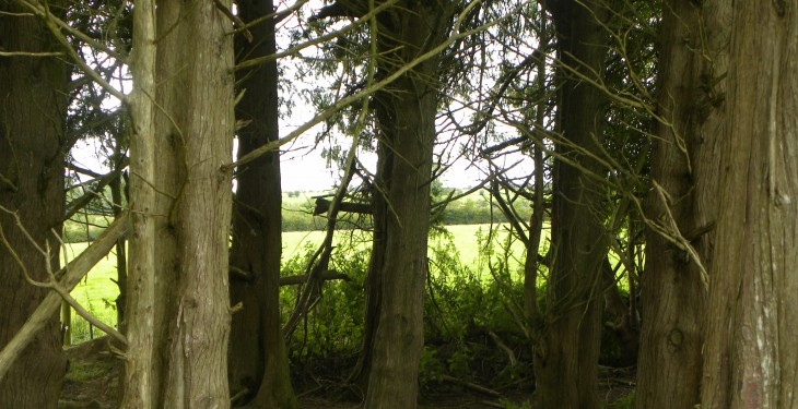 Planting forestry? Know how close you can plant to your neighbour
