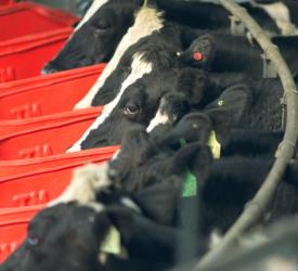 Increasing efficiency in your milking parlour