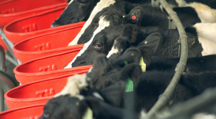 'High dairy production levels in New Zealand will take time to be absorbed'