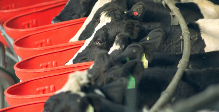 9 out of 10 Kiwi dairy farmers to take on extra debt this year