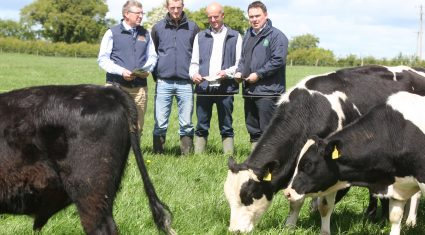Grassland farm walk to look at profitability of dairy calf to beef production