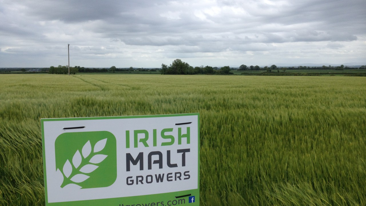 Malting barley growers call for IFA resignations due to 'unfair' treatment
