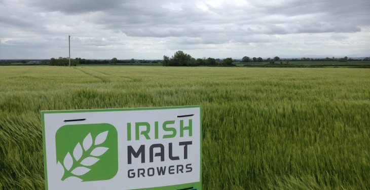 IFA recognises Irish Malt Growers, but only as a 'discussion group'