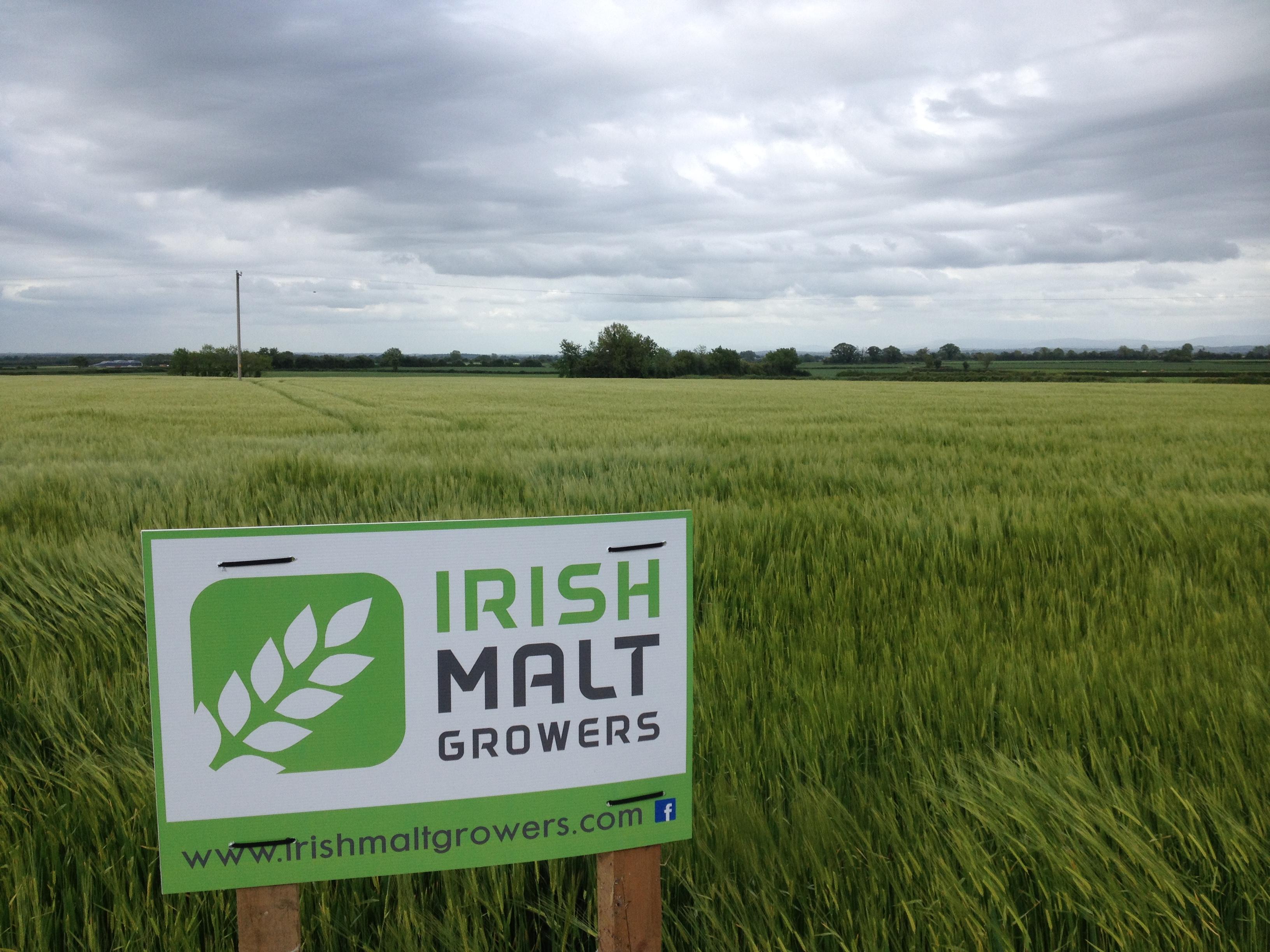 Barley Group 92