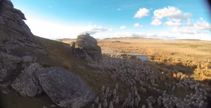 Amazing video of farmer herding thousands of sheep from the sky