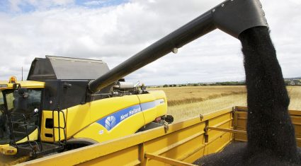 Area under oilseed rape falls by more than half in 3 years