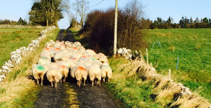 Sheep farm returns on track to reach a 4-year high