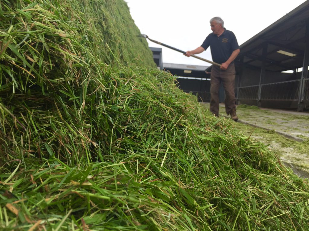 Silage pit nice 1 grass