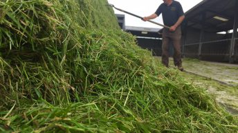 'Decisions taken over the next six weeks will have a major effect on silage quality'