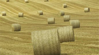 Straw prices down in some regions
