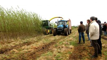 Would spring barley growers be better off growing willow?