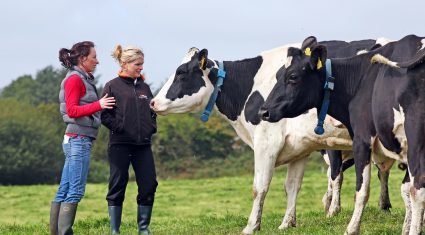 How to deal with low butterfat levels on the farm