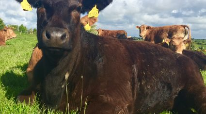 Ireland holds fourth place on EU cattle price league table