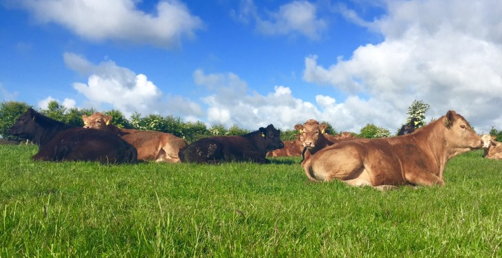 Teagasc July beef tips: rotate stock and take out the bull