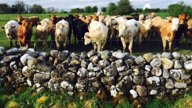 BSE is just one animal health issue putting pressure on Minister