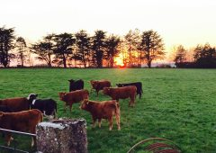 Post-election programme for government 'critical' for agriculture – ICOS