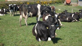 Dairy farmers – last nine months have been tough? Real problems to hit next spring
