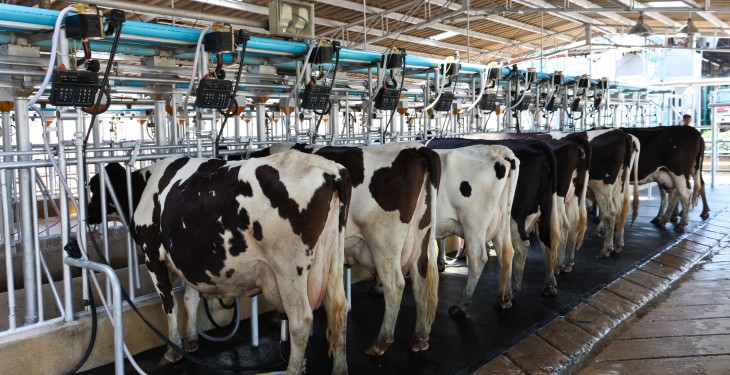 Aurivo's June milk price cut by 2c/L