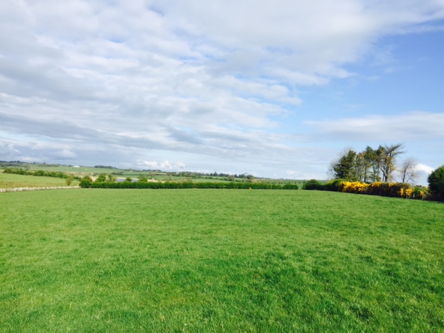 Top tips for better grass management this July – Teagasc