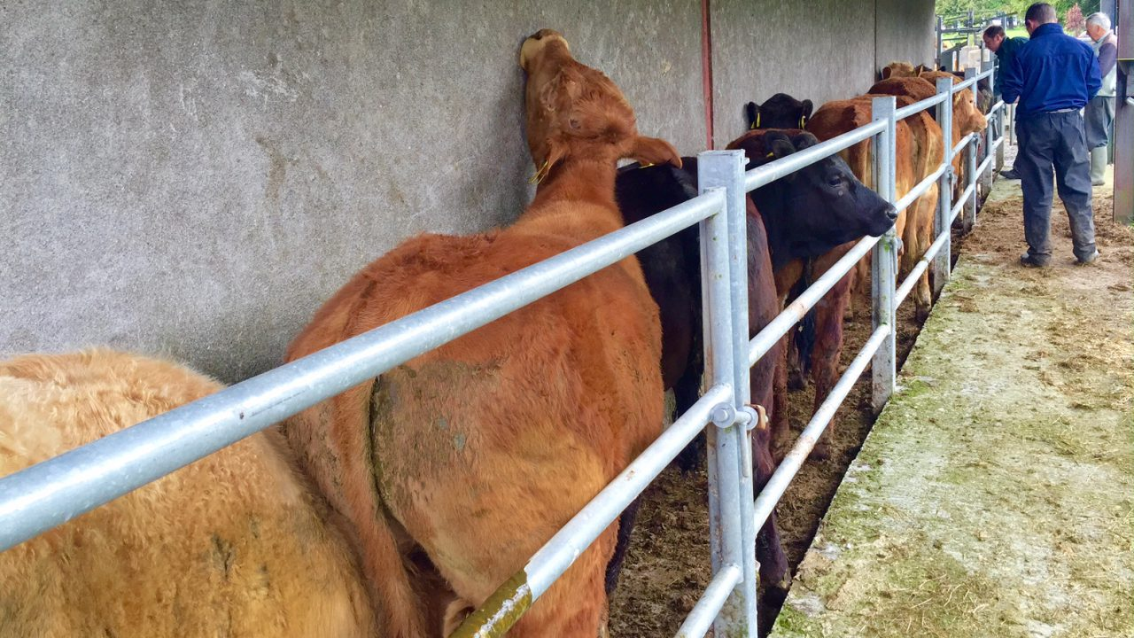 TAMS II: See costings for cattle handling facilities