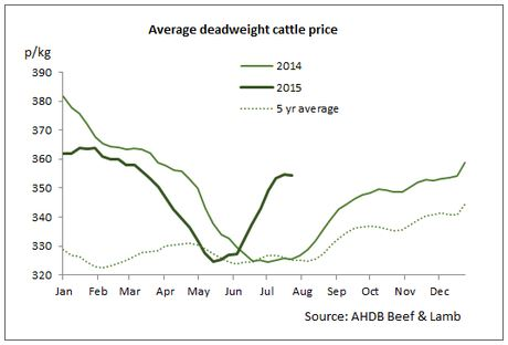 'Heat has left the UK cattle trade, as healthy supplies fill chill rooms'