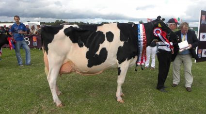 Trade stands already booked out ahead of Tullamore Show