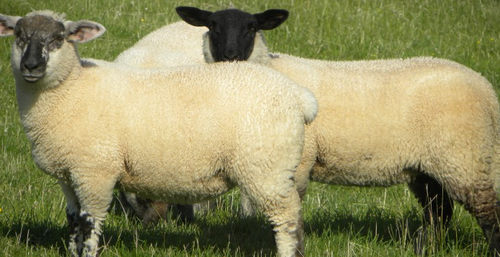 Now is the time to start planning for Easter lambs