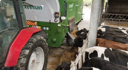 Dairy feed usage up in 2015 – Teagasc