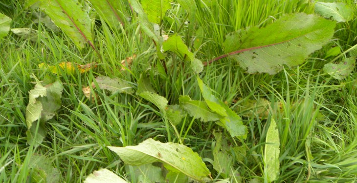 Do you have the best weed control option for your grassland?