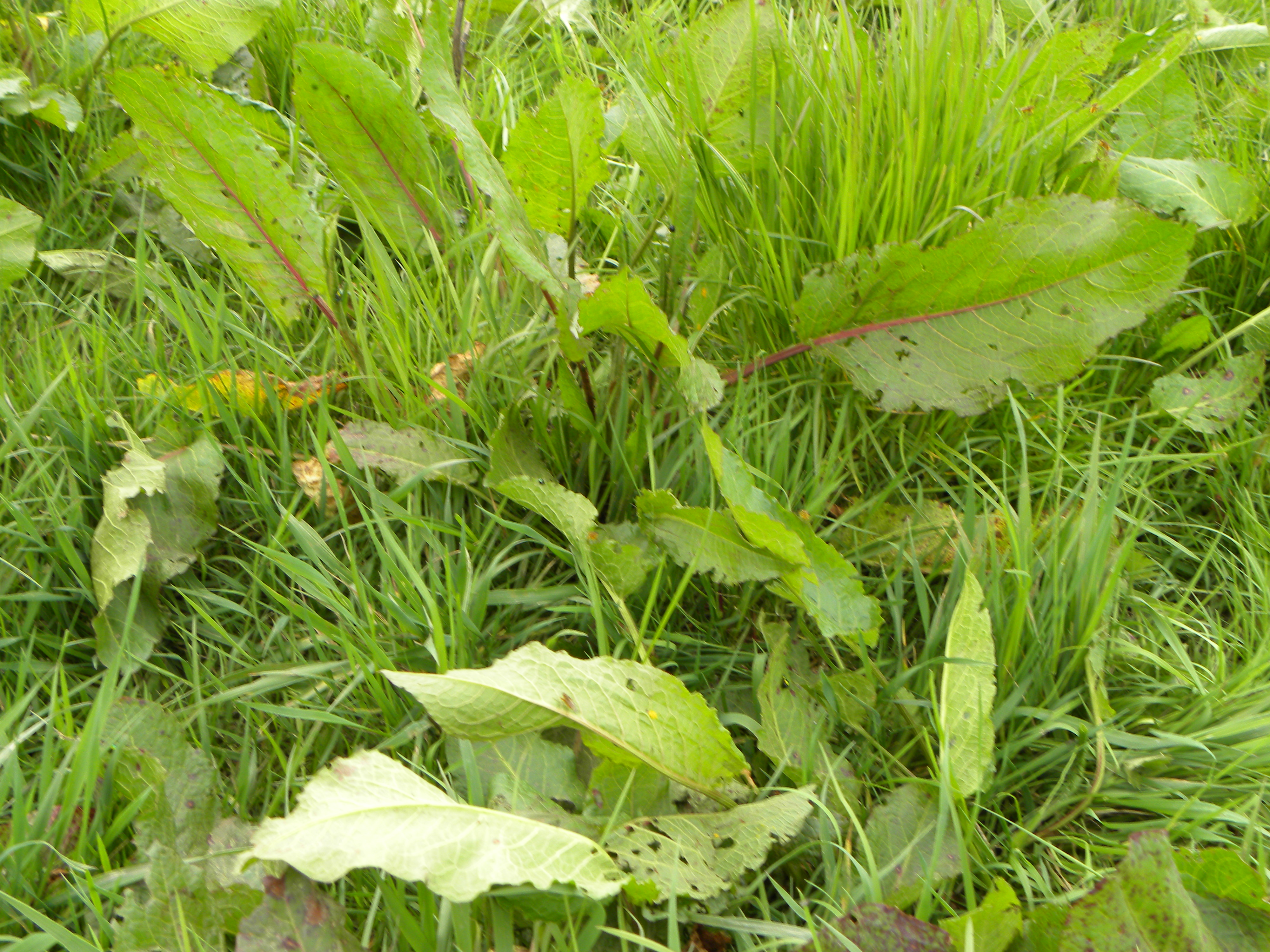 Six of your weed control questions answered by Teagasc - Agriland ie