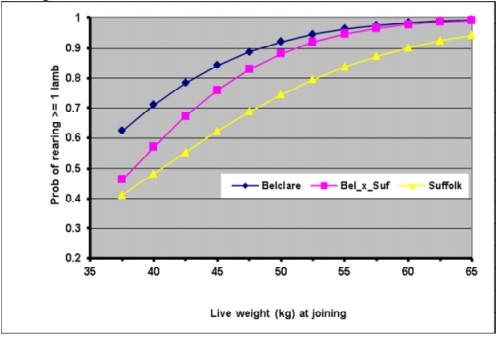 Effect of joining weight of ewe lambs from 3 different genotypes on the probability of rearing one or more lambs