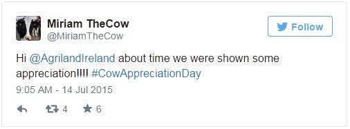 Miriam cow tweet