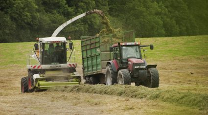 No farm death due to overhead lines since 2004