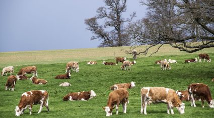 27% of applications to Genomics Scheme from farmers with less than 10 cows