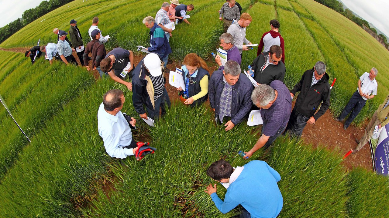 'Tillage farmers' margins increase with hybrids'