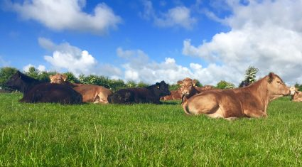 Finding homes for more cattle in 2017 could be difficult – Bord Bia
