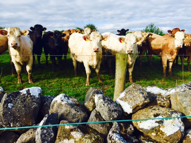 Teagasc blueprint for the beef sector to be ready for Ploughing