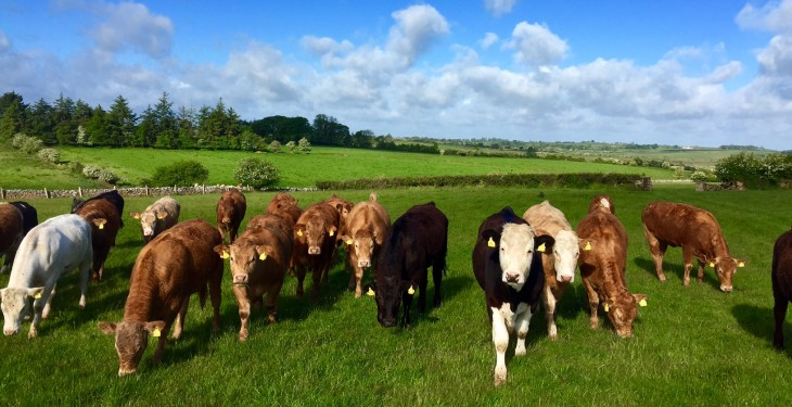 Lamb and beef price gap narrows – just 10c between the two