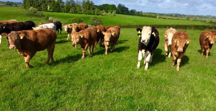 Interim Nitrogen and Phosphorus statements for cattle online