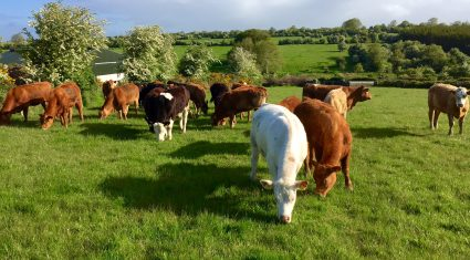 'Increasing farm incomes more important than reducing emissions'