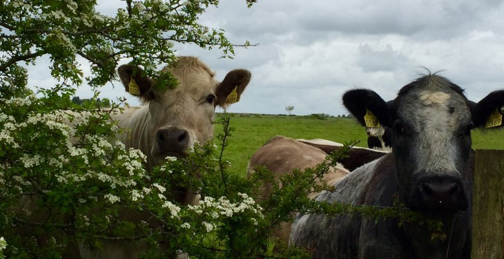 'Climate plan must support Ireland's grass-fed production model' – ICOS