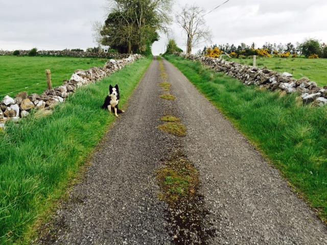 Changeable weekend weather, widespread rain next week – Met Eireann