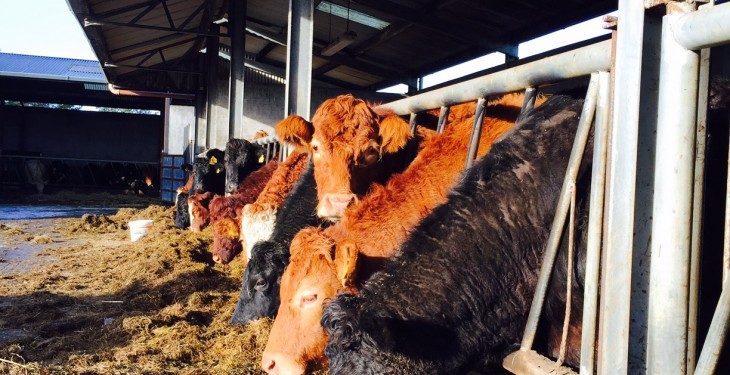 'Demand for meat and dairy driving demand for animal feed'