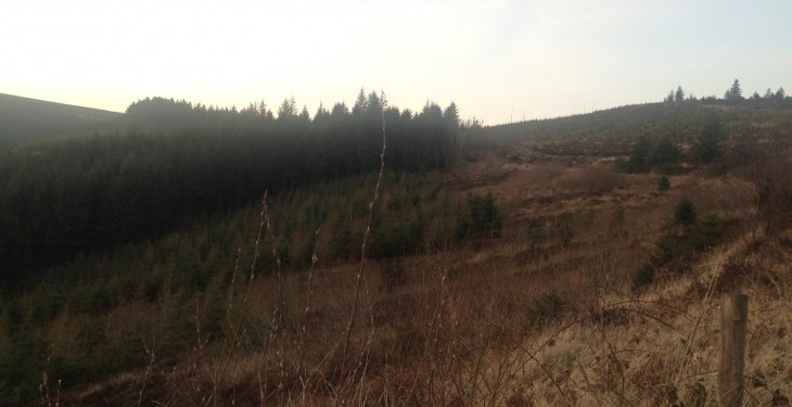 'Forestry could be five times profitable than hill sheep farming'