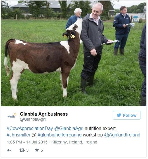 glanbia cow
