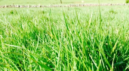 'Just because you don't live in Cork doesn't mean you can't grow lots of grass'