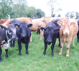 Building resilience into a beef enterprise in Co. Fermanagh