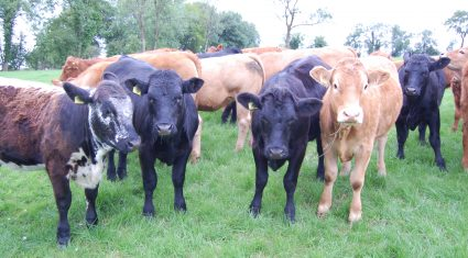 Cattle slaughterings down 4.6% year-on-year – CSO